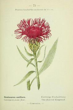 1 - Nouvelle flore coloriée de poche des Alpes et des Pyrénées. - Biodiversity Heritage Library
