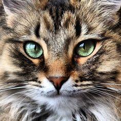 Lucy Lu. cat