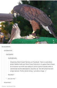 birds of prey Cute Funny Animals, Funny Cute, Funny Birds, Animals And Pets, Baby Animals, Tumblr Funny, Funny Memes, Animal Pictures, Funny Pictures