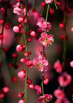New Ideas Wall Paper Flores Nature Cherry Blossoms Flower Background Wallpaper, Flower Phone Wallpaper, Flower Backgrounds, Beautiful Flowers Wallpapers, Beautiful Nature Wallpaper, Pretty Wallpapers, Amazing Flowers, Pretty Flowers, Bokeh