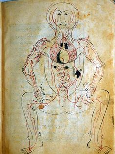 The venous system, with figure drawn frontally and the internal organs indicated in opaque watercolors.  From The Anatomy of the Human Body (Tashrih-i badan-i insan) written in Persian at the end of the 14th century by Mansur ibn Ilyas.