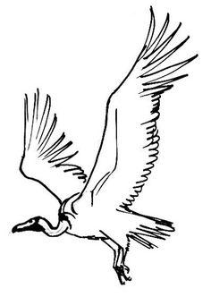 Vulture Skeleton | handwork. in 2019 | Vulture, Art ...