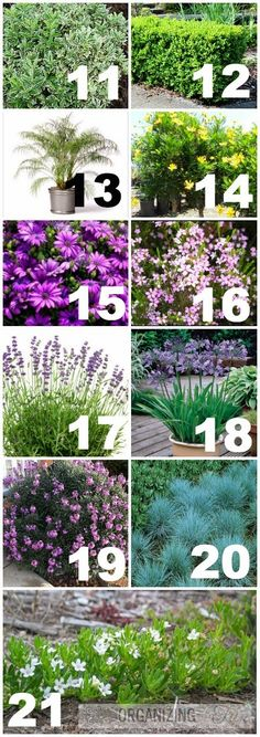 List of plants used in drought tolerant yard :: OrganizingMadeFun.com