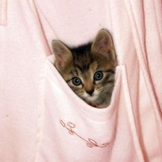Kitty In Pocket