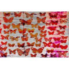 Parvez Taj Moths Art Print on Premium Canvas, Size: 36 inch x 24 inch, Multicolor