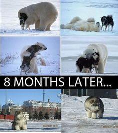 A Polar Woof!