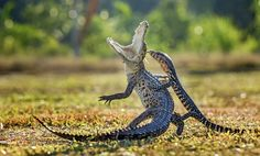 Images From the 2016 Sony World Photography Awards 06