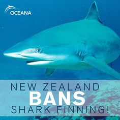 New Zealand has announced that it will ban the brutal practice of shark finning.