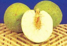 Breadfruit photos