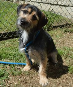 Roscoe and  other dogs were surrendered to the shelter because the owner was moving out of town and couldn't take them. We were told Roscoe is housetrained and good with children. These dogs are very  sweet, love people, and are easy to handle, but...