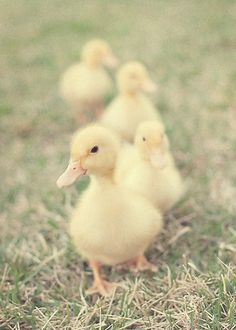Duckies.