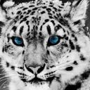 Check out my profile on Wattpad, I'm BellTheTiger HAI! You may call me Bell, or Silver, if you'd like. I LOVE UNDERTALEEE! I'm also a Creepypasta fan.  Some things 'bout mai; Fav color: Black, Red, Blue, Gray. *Loves Animal Jam.* Crush: (Yes, don't judge). Cross! Sans. ^SENPAI!!^ More stuffz 'bout mai:  I have a group of friends. I like staying in...