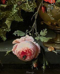 Botanical Drawings, Botanical Illustration, Botanical Prints, Illustration Art, Baroque Painting, Baroque Art, Beautiful Flower Quotes, Beautiful Flowers, Holland Flowers