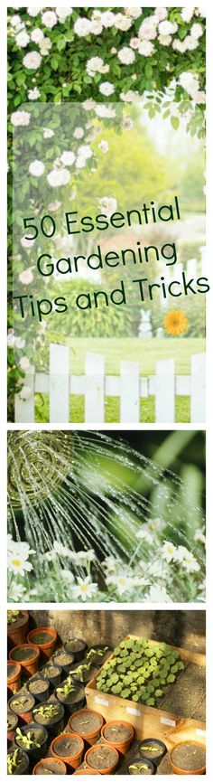 From picking the right flowers to decorating your garden shed, here are all the gardening tips and tricks you need to know to create a beautiful backyard.