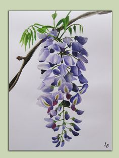 Wisteria watercolour on Pinterest | Wisteria, Watercolors and ...