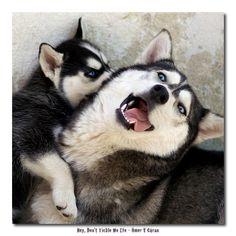 Favorite dogs!!