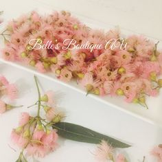 Light pink eucalyptus flowers, dried or fresh eucalyptus blossom, florist craft supplies, gumnut blossom flowers, Australian native flowers This 50g bag of natural, loose, light pink, eucalyptus flowers is perfect for many different craft projects Add them to floral displays, wreaths, bowls or