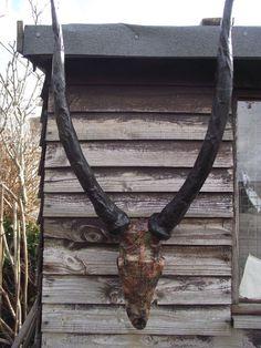 Antelope Skull Horns Antlers Faux Taxidermy Steampunk Interior Weird Trophy Art #Kuriology
