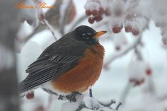 Vinterfugl