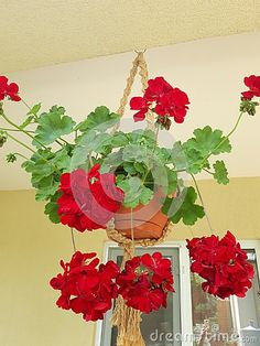 Hanging pots with flowers for decoration.