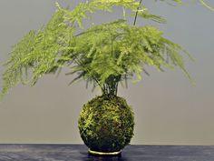 Unique kokedama Ball Ideas for Hanging Garden Plants selber machen ball Ikebana, Love Garden, Dream Garden, Air Plants, Garden Plants, Indoor Garden, Outdoor Gardens, Art Floral Japonais, Mini Mundo
