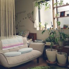 Monaluna/クッション/ひものれん/ディアウォール/DIY/観葉植物…などのインテリア実例 - 2015-03-14 12:33:09 | RoomClip(ルームクリップ)