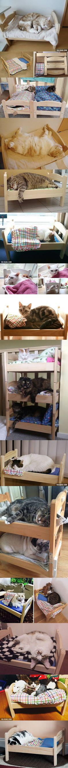 Some clever Japanese cat owners have re-purposed a simple but popular doll bed from IKEA, turning it into an adorable bed for their cats and other pets. Not for dogs but I like it Ikea Doll Bed, Doll Beds, Ikea Bed, Pet Furniture, Furniture Market, Furniture Ideas, Chat Kawaii, Japanese Cat, Ideal Toys