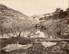 Bonfils. Palestine, Piloé    #Orient #Palestine_Palestina