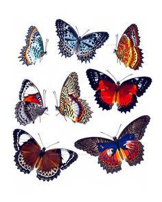 Vintage print butterflies