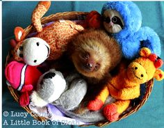 sloth among friends