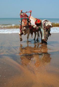 Sunday best on Anjuna, Goa, India. By konstantynowicz Goa India, South India, Mother India, Rural India, Amazing India, Hampi, Visit India, Beautiful World, Beautiful Places
