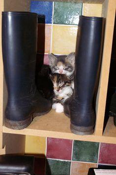 Kittens vinden altijd wel een originele plek om te slapen.