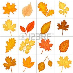 hojas de otoño: autumn leaves