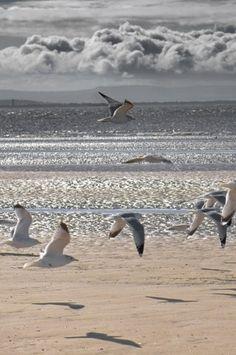 Birds flying over the beach...