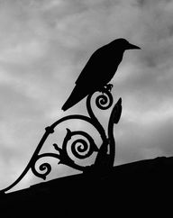 Raven on the roof