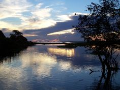 The Amazon River...  So intrigued by it and all the creatures that inhabit it.