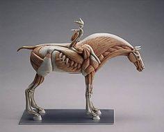 Pegasus, Masao Kinoshita 木下政雄