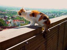 三毛猫が働いてるの!?ドイツのニャンコ市職員が可愛い♡ - NAVER まとめ