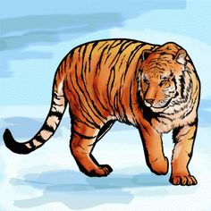 How to Draw a Bengal Tiger, Draw Tigers, Step by Step, safari animals, Animals, FREE Online Drawing Tutorial, Added by MichaelY, January 7, 2013, 7:54:09 pm