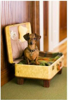 vintage suitcase into dog bed, store toys in pocket. So cute, must for pumpkin and nell!