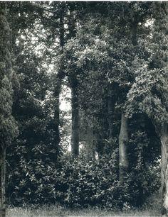 Paul Strand – Mírame y sé color.- Masters of photography