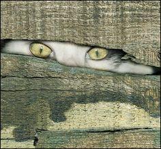 Eyes #cat