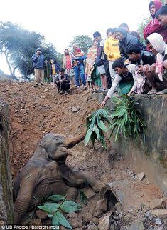 L'elefantino indiano salvato dai passeggeri di un treno (FOTO)