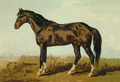 A Dongola Horse, by James Ward