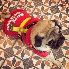 I think the 1000 year old Château appreciated my over the top Christmas jumper  #puglife