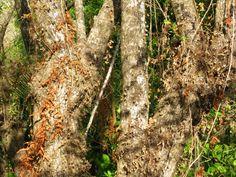 Toutes les tailles | COSTA RICA 2068b (Copier) | Flickr: partage de photos!