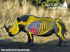 where to shoot a rhino Africa Hunting, Skeletal System, Rhinoceros, Impala, Archery, The Help, Beast, Lion Sculpture, Elephant
