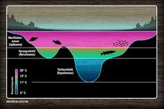 Importance of thermocline for fishing success | Bedeutung der Sprungschicht für den Angelerfolg