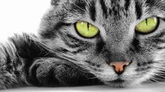 http://www.catherinedupuis-creations.fr/joseph-mery/ création et conception de sites internet WordPress à Nice