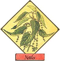 CHECK THIS OUT! There are dozens of stinging nettle benefits including its ability to stop both internal and external bleeding, purify the blood and soften hair while nettle tea helps cure mucus congestion and ease rheumatism. Healing Herbs, Medicinal Herbs, Natural Home Remedies, Herbal Remedies, Nettle Benefits, Soften Hair, Herbs For Health, Mother Earth News, Wild Edibles